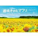 遅咲きのヒマワリ ~ボクの人生、リニューアル~ DVD